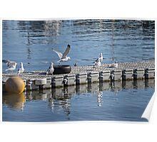 A Diving Platform For Gulls Poster