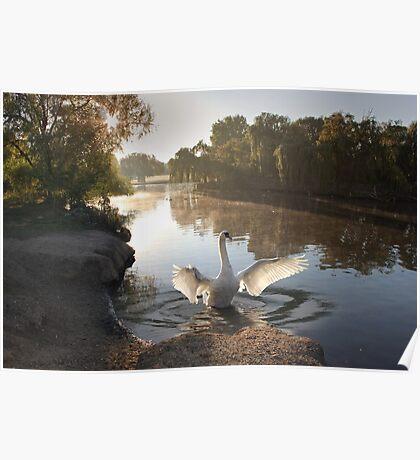 Swan's Lake Poster