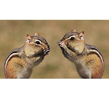 Chipmunk Chatter Photographic Print