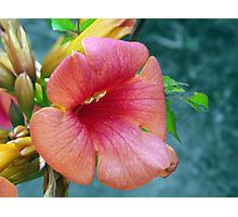 Orange Trumpet Flower Photographic Print