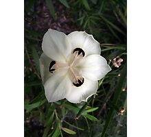 Spotted White Flower Photographic Print