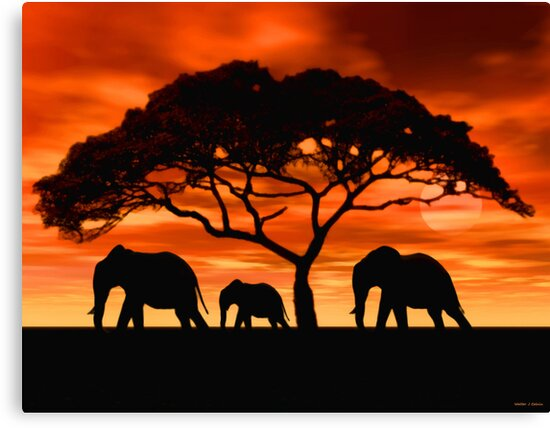 Acacia Elephant Sunset by Walter Colvin