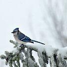 Snowed In by LavenderMoon
