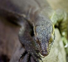 up close lizard! by bluetaipan