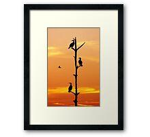 Cormorants Sunset Framed Print