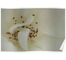 Bridal White Poster