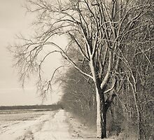 Chicauqua Bottoms Levee Trees by cwwycoff
