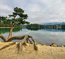 Lac Beauvert, Jasper National Park by Teresa Zieba