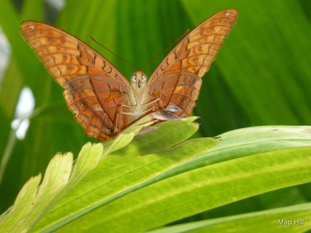 Flutter By by Matt Hill