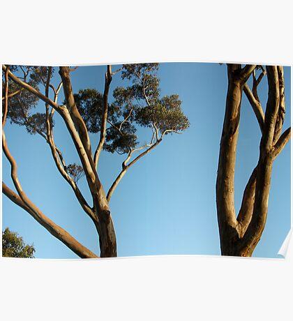 Gum Trees. Poster