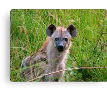 A Curious Spotted Hyena  Canvas Print