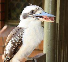 Kookaburra Eating. by glenlea