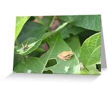 Frog and Wasp in Harmony Greeting Card
