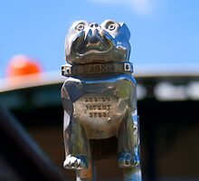 Hood Ornament - Bull Dog Mack #2 by Deborah McGrath
