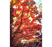 Autumn Song  Photographic Print