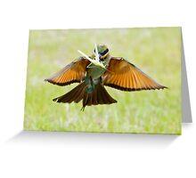 Rainbow Bee-Eater 76 Greeting Card