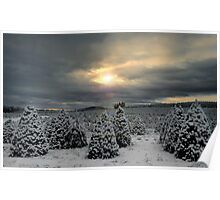 Fir Trees and Snow Poster