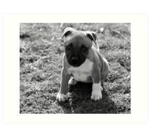 Staffordshire Bull-Terrier Puppy Art Print