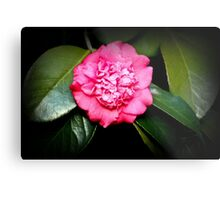 Double Flowered Camillia Metal Print
