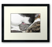 Feel the Love Framed Print