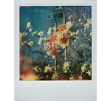in succession Photographic Print