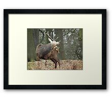 Have Antlers Will Scratch Framed Print