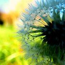 Dandelion by ReidOriginals