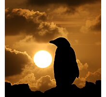 Penguin Silhouette Photographic Print