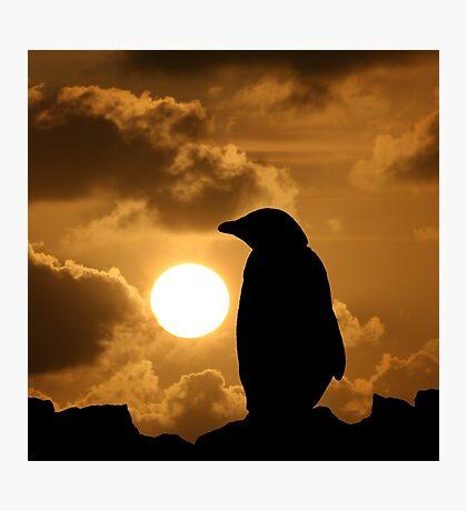 Penguin Silhouette Photographic Print