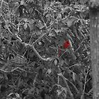 Cardinal in a Tree by ValeriesGallery