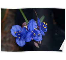 Whimsical little blue flowers Poster