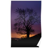 Silhouetted lone tree at dusk Poster