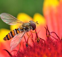 Mmm Nectar by ColinKemp
