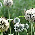 Busy Bee by ColinKemp