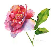 Rose Watercolor II Photographic Print