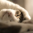 I See You by Amy Collinson