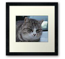 Uninterested Cat Framed Print