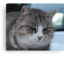 Uninterested Cat Canvas Print