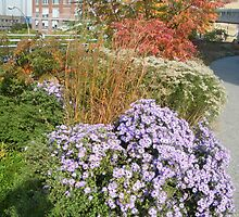 High Line, New York's Elevated Garden and Park by lenspiro