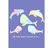 Pastel Whales - save the whales! Photographic Print