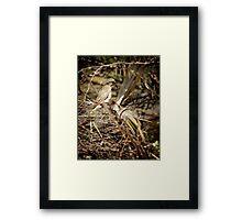 """""""FEED ME!"""" - Kardinya, W.A. Framed Print"""