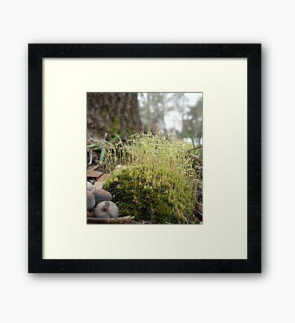 TINY MOSS FOREST Framed Print