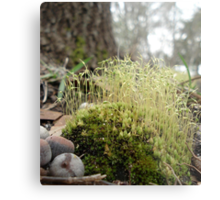 TINY MOSS FOREST Metal Print