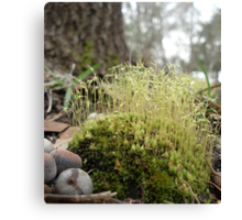 TINY MOSS FOREST Canvas Print