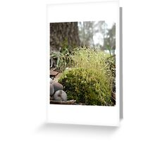TINY MOSS FOREST Greeting Card