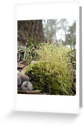 TINY MOSS FOREST by May Lattanzio
