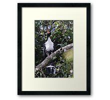 Horned Guan Framed Print