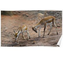 Deer fight! Poster