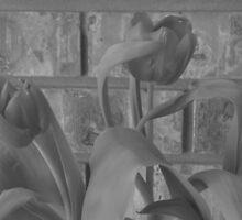 Tulips by Brian Bielert