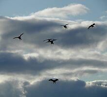 Honk! Honk! Wings Out, Paddles Down by BettyEDuncan